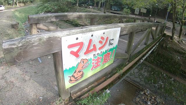 山城町森林公園のマムシ